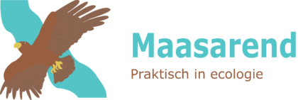 Maasarend