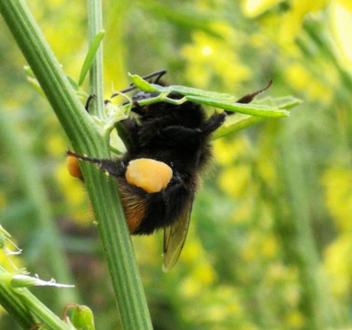 Insecten doen een beroep op uw gemeente!