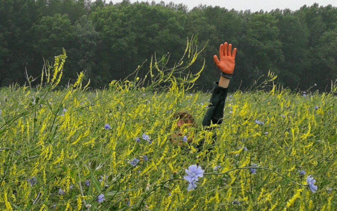 Aan de slag voor het tweede jaar insectenonderzoek PARTRIDGE