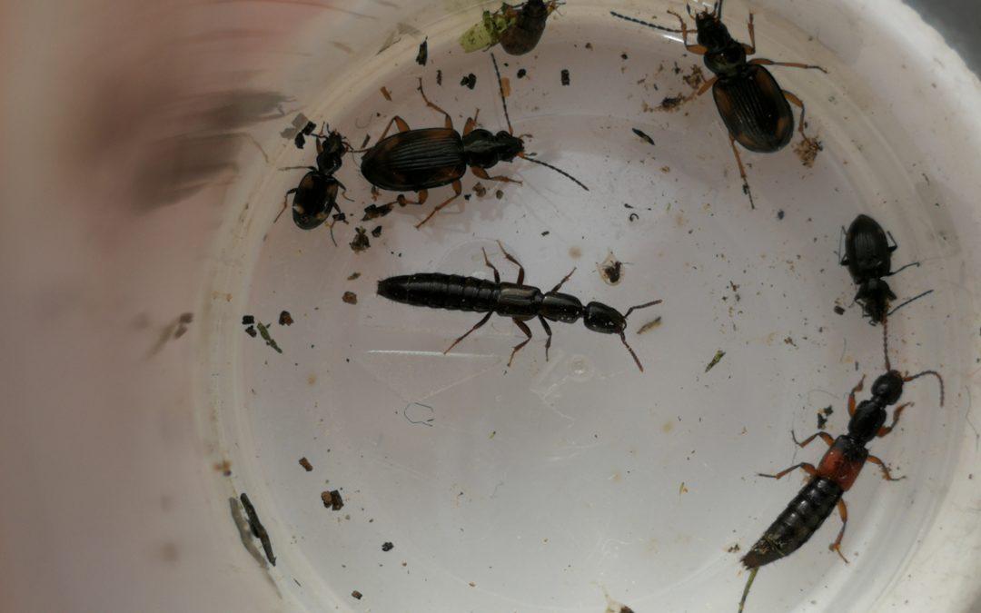 Explosieve toename insecten door maatregelen PARTRIDGE